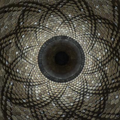 parabolic-thumb